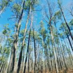 Uwharrie National Forest Thru-Hike: Tuscarora Trail Trees and Catawba Arrowheads