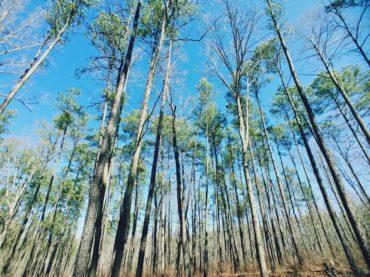 Uwharrie National Forest Thru-Hike: Tuscarora Trail Trees and Catawba Arrowheads